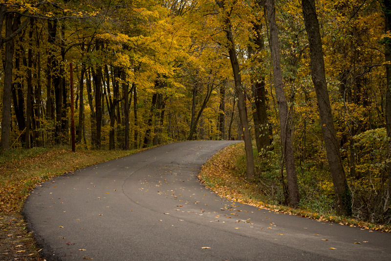 canva-road-in-autumn-forest-MACNS_W3AlM.jpg