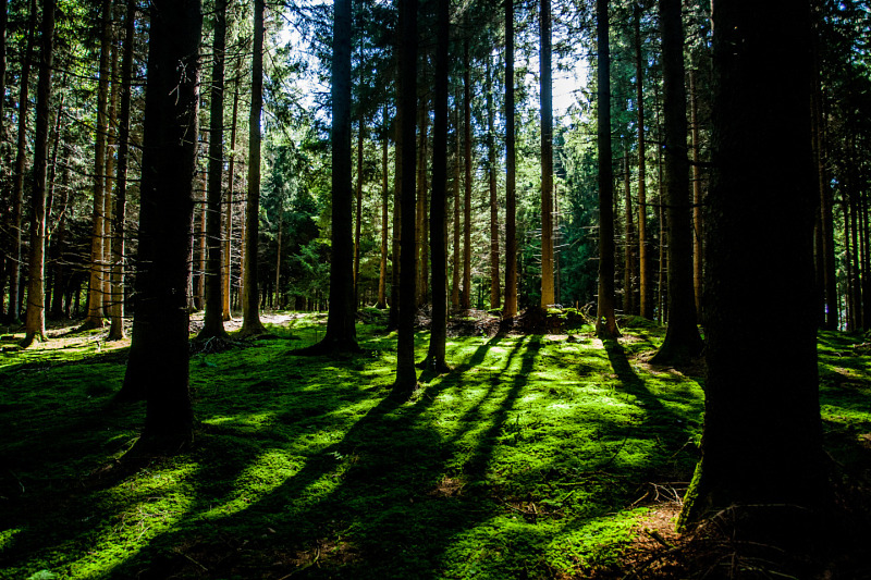 canva-forest-with-shadows-of-tree-MABKNIETai0.jpg